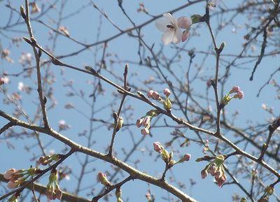 2012,春 010-2.jpg