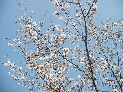 2012,春 017-2.jpg