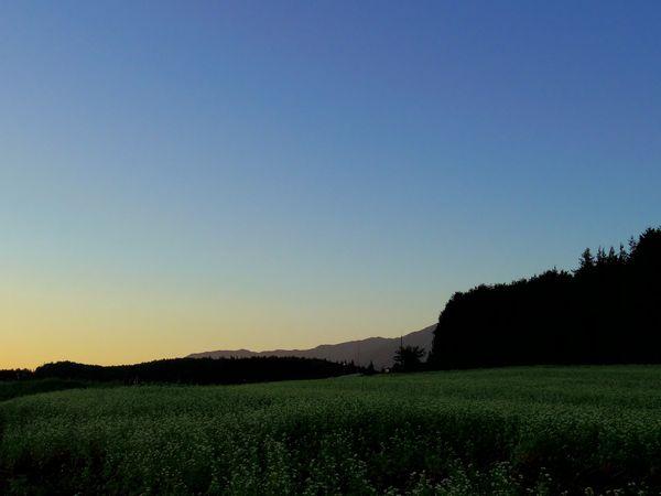 そば畑.jpg